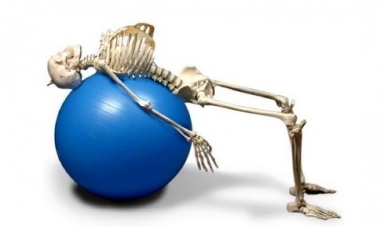 Physiotherapy Skeleton with movable spine - zdjęcie nr: 1