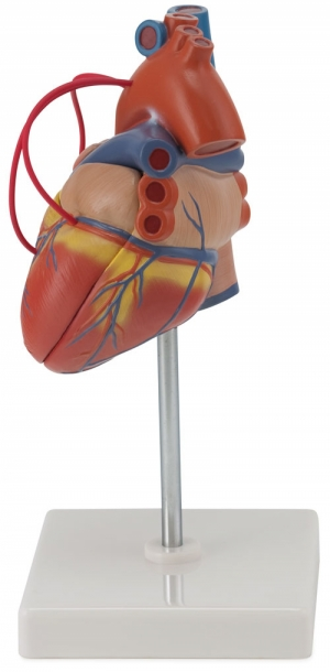Heart with bypass - photo nr: 1
