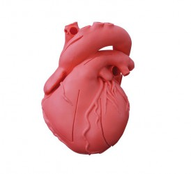 Heart model, flexible, didactical version - zdjęcie nr: 1