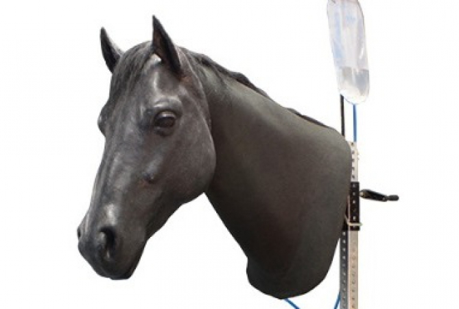 Equine Neck Venipuncture and Intramuscular Injection - zdjęcie nr: 1