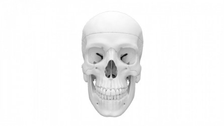 Detailed 3d skull model for learning anatomy, 4-parts  - photo nr: 1