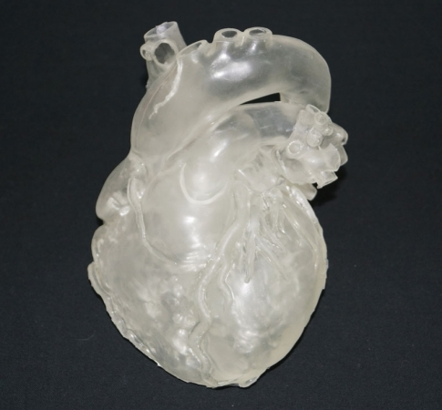 Heart model, professional, clear - photo nr: 1